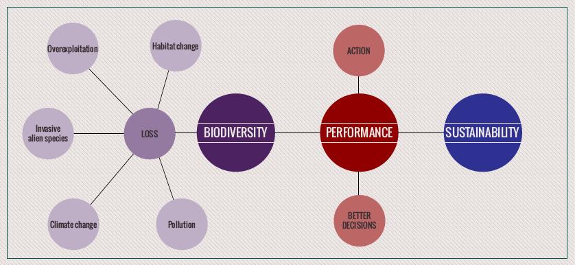 Biodiversity, sustainability and performance